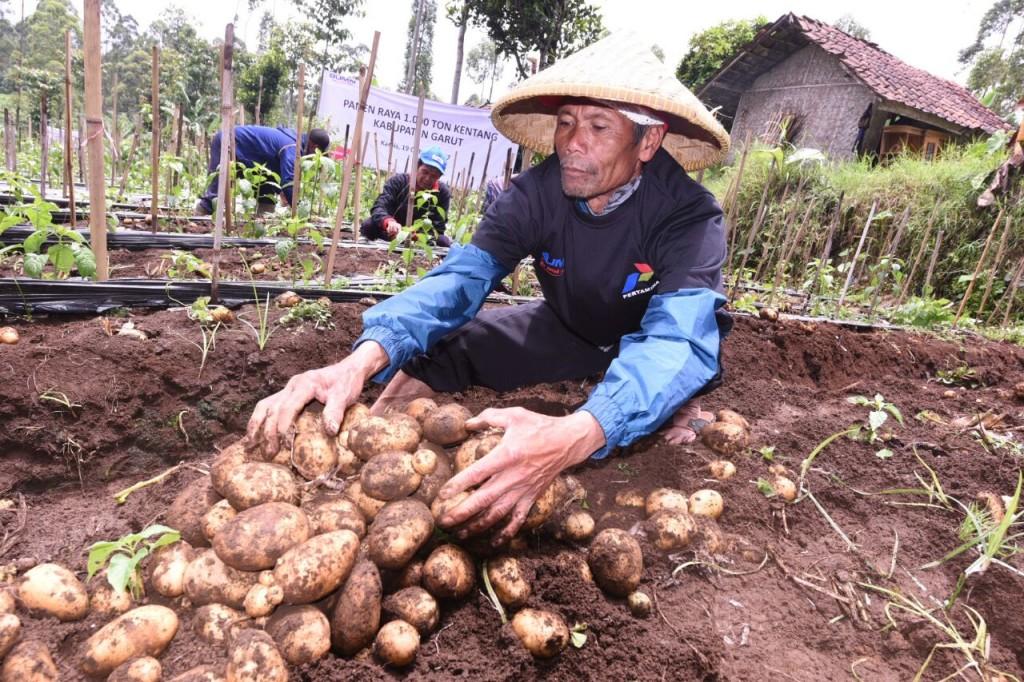 Petani kentang di Garut. Foto: Pertamina.
